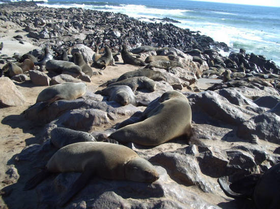Cape_Cross_Seal_Colony