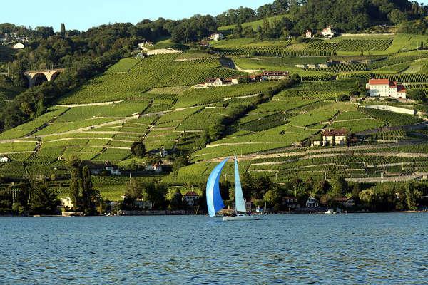 Viñeados de Lavaux, en Suiza