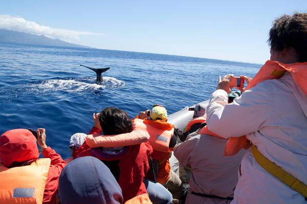 Avistamiento de ballenas, Islas Azores