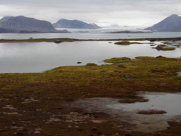 Fiordos de Kongs, en Blomstrandhalvoja.