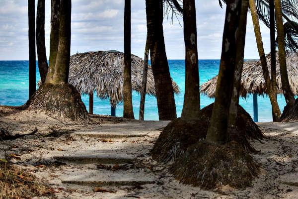 Palmeras en la playa de Varadero, Cuba
