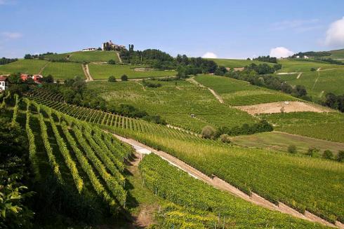 Viñedos de Langhe, en Piamonte, Italia